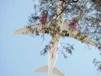 wit en blauw vliegtuig dat over de roze boom van de kersenbloesem vliegt