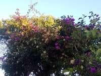 Blumen in Sardinien