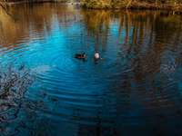 2 Enten schwimmen tagsüber auf dem Wasser
