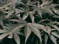 groene en grijze bladeren op zwarte achtergrond