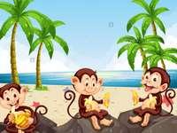 aboutorabi Scimmie e bambini che imparano