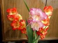 Μπουκέτο Gladiolus