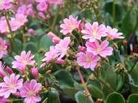 różowe kwiatuszki