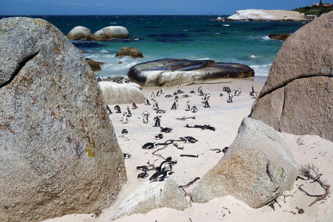 Плаж Пингвин - Плаж на пингвин до океана (19×13)