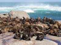 Insula Seal