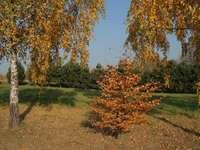 Φθινοπωρινά χρώματα