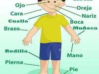 El cuerpo humano niño