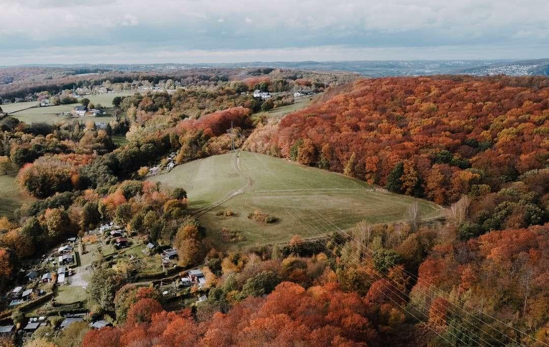 vista aerea di alberi verdi e marroni e campo di erba verde - vista aerea di alberi verdi e marroni e campo di erba verde durante il giorno. . Hagen, Germania (7×5)