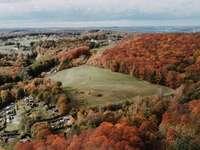 luchtfoto van groene en bruine bomen en groen grasveld
