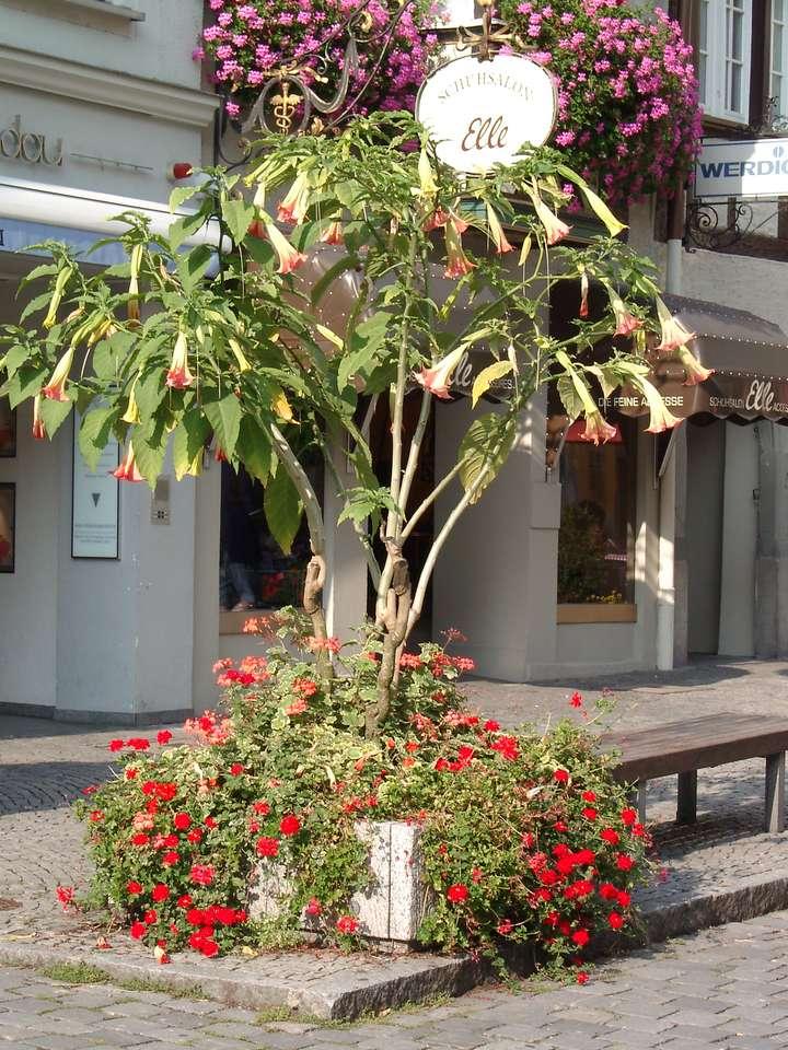 Tulipán strom