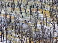 bruine kale bomen op bruin veld overdag