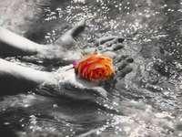 Die Rose über dem Wasser