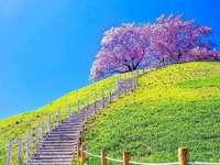 Frühling in Japan.
