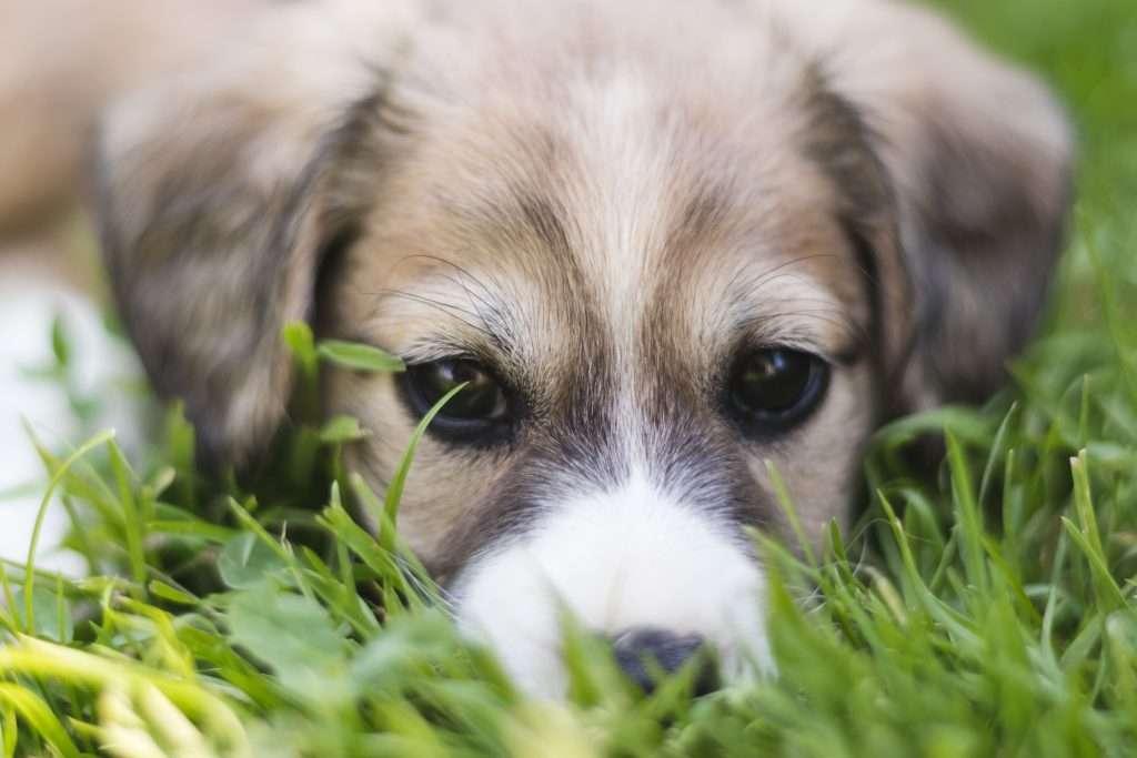 pequeno cachorro - pequeno quebra-cabeça de cachorro 20 para crianças (5×4)