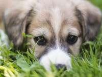 pequeno cachorro