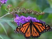Vagrant fjäril