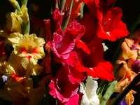 Gladiolen boeket