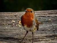 oranje en witte vogel op bruin houten oppervlak overdag