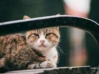 brązowy pręgowany kot na czarnej metalowej ramie