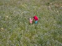 Mädchen in der rosa Jacke, die auf grünem Grasfeld geht