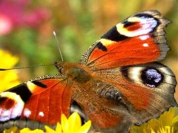 Urok motyla
