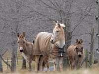 cavalos marrons e brancos em chão de concreto cinza