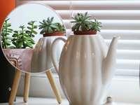 fehér kerámia teáskanna, zöld növény, barna fából készült asztal