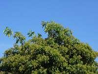 árbol verde bajo un cielo azul durante el día