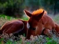 Жребче на цветна поляна
