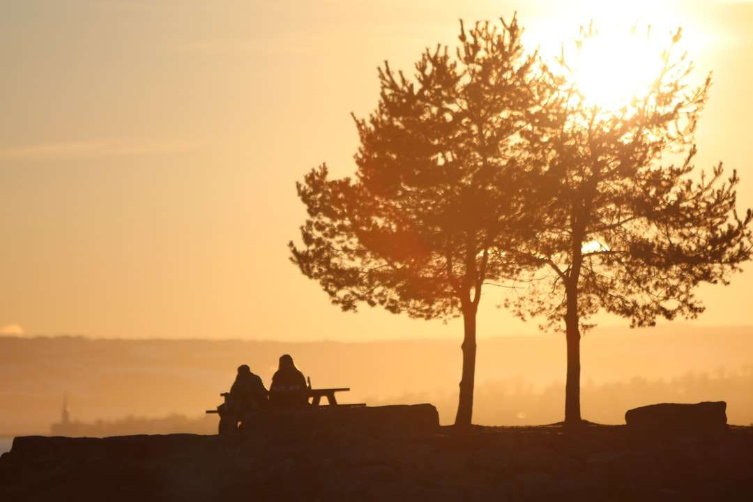 silhouette of 2 person sitting on bench near tree - silhouette of 2 person sitting on bench near tree during sunset. Sunset and love (12×8)