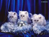 три котенца