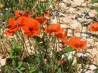 flori portocalii pe pământ stâncos gri