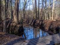 brązowy drewniany pomost na rzece otoczony drzewami