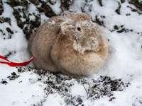 Conejo marrón sobre suelo cubierto de nieve