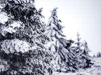 foto in scala di grigi di albero coperto di neve