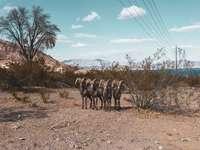 Gruppe von Pferden auf braunem Feld unter blauem Himmel während des Tages