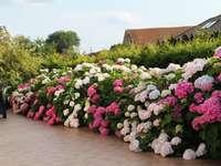 Ein Blumenstrauß von der Terrasse
