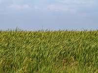 grüne Wiese unter blauem Himmel während des Tages