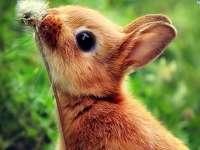 coelho, leiteira, bom tempo, verão, vegetação