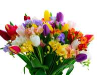 Freesia make freesia