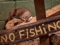 brown and white animal on brown wooden welcome signage