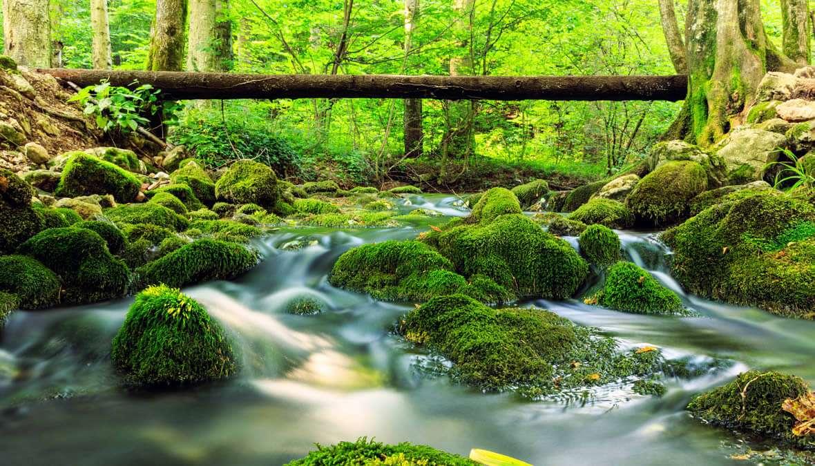 Parc national en Roumanie puzzle