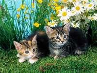 kitties among flowers puzzle