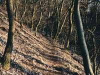 bruine bomen op bruine grond