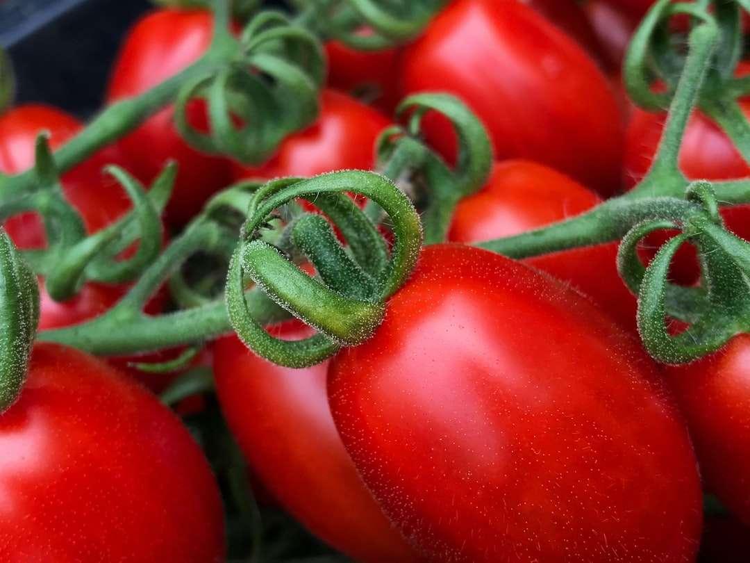 czerwone owoce pomidora w fotografii z bliska