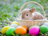 Coniglietto di Pasqua