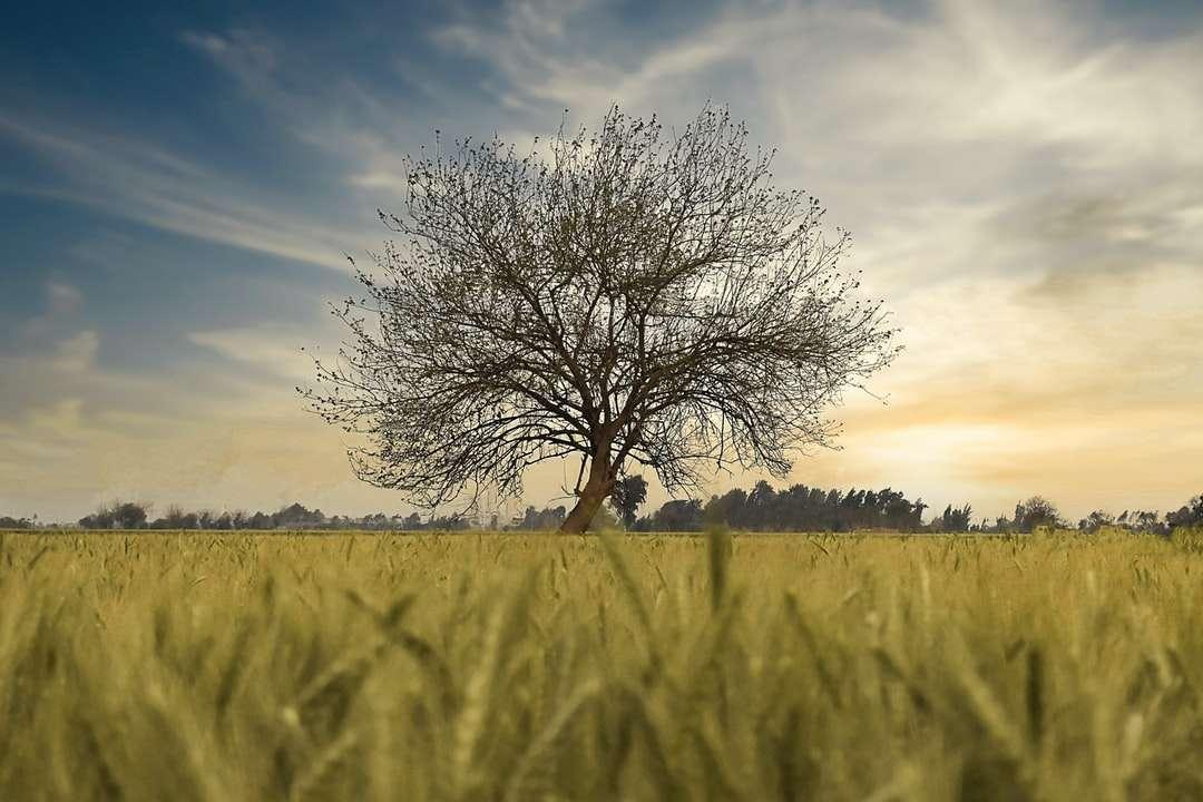 Arbre sans feuilles sur champ d'herbe verte sous le ciel bleu