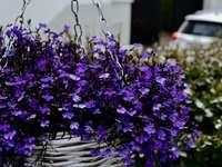 fioletowe kwiaty na brązowym plecionym koszu