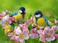 Sikorki op een bloeiende tak