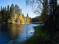 râu între copaci în timpul zilei
